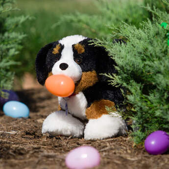 Bernese Mountain Dogs are loyal guardians with love for all outdoor activities. Known for their tri-colored coats, they're very gentle and a little shy.