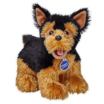 Yorkshire Terriers are little packages of friendship and loyalty. They will stay by your side through thick and thin, if you have treats in your pocket.