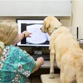 Dog and Vet looking at Xray image